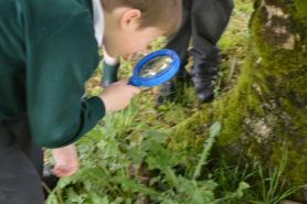 Primary 1 and 2 Nature Walk